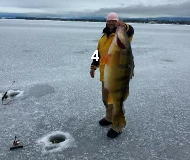 Buck 39 s bait tackle blog archive ice fishing is cool for Ice fishing for perch