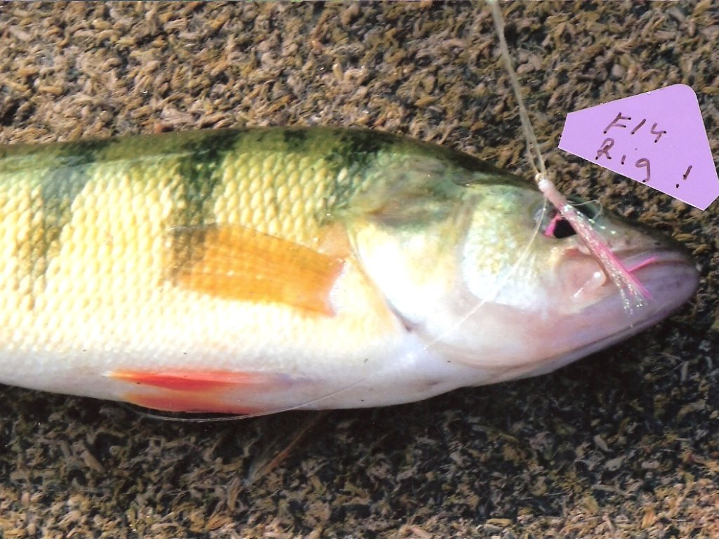BUCK'S BAIT & TACKLE » Blog Archive » LORIE RIGS BY MAIL NOW